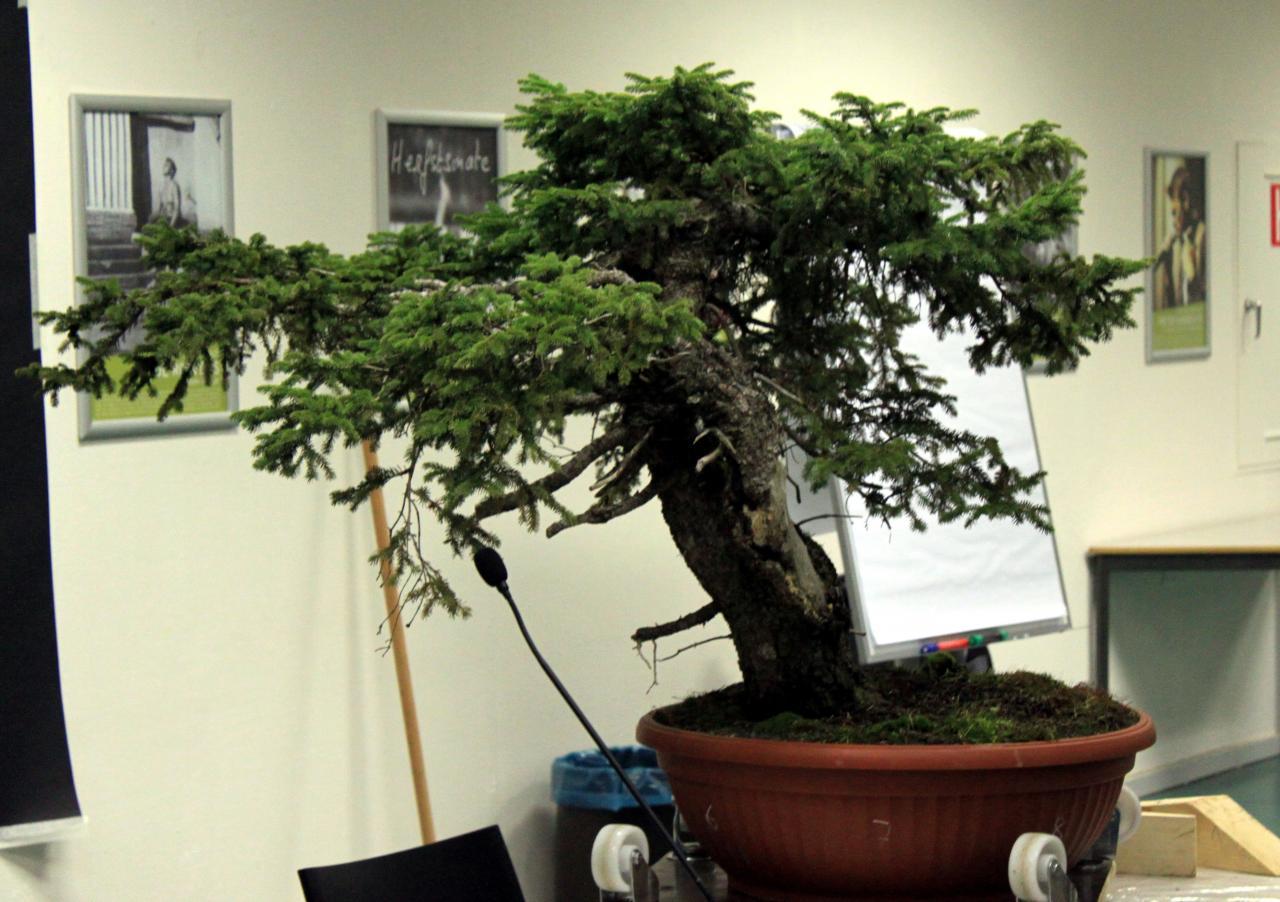 Plant 1-1