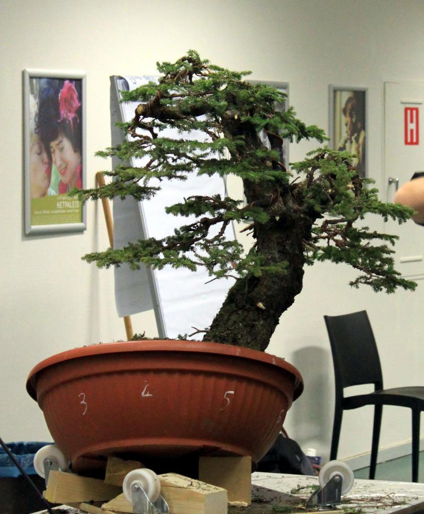 Plant 1-2