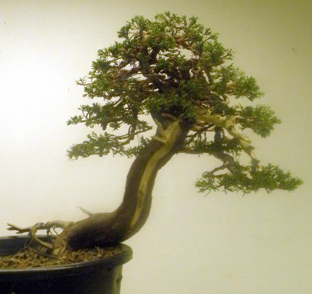 Réalisations à partir d'un plant de pépinière