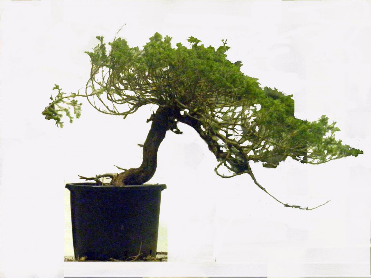 plant 2-2